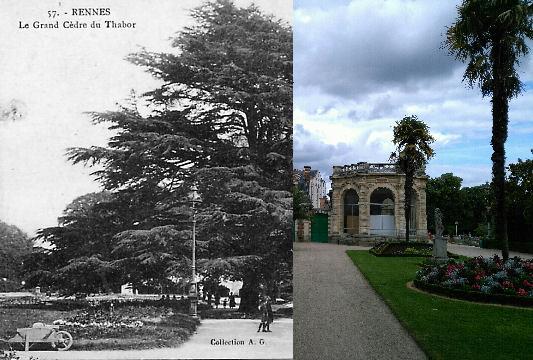 Rennes - Le grand cèdre du Thabor